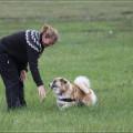 Heimilishundurinn verður hjálparhundur