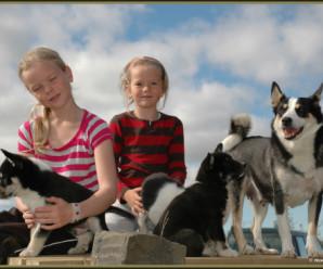 Er ótti við hunda lært atferli?