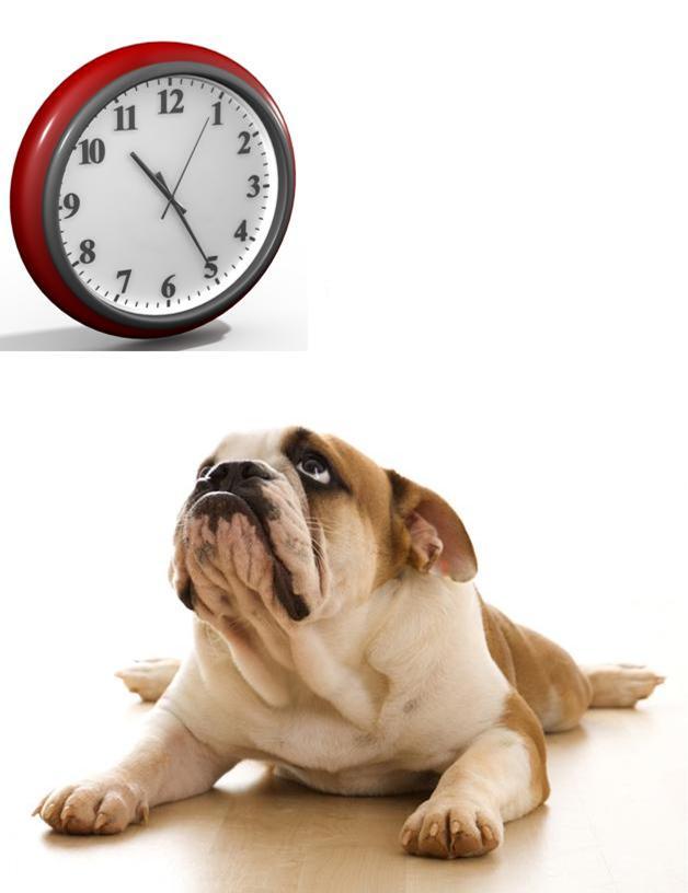 Eru hundaleyfisgjöldin tímaskekkja?