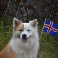 Gleðilega þjóðhátíð
