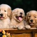 Ofnæmispróf fyrir hunda