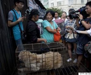 10.000 hundar drepnir hvert ár fyir Yulin hátíðina í Kína