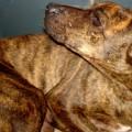Hreinsun hunda – fyrr og nú