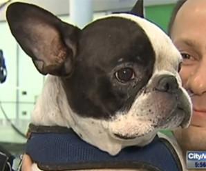 Flugstjóri hjá Air Canada bjargar lífi hunds eftir að hitinn fór í fraktinni