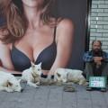Hundalíf í Hamborg