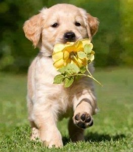 Puppie Dogs Holding a flowers