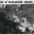 Viðtal við Svein Kjarval 1968