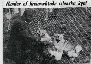 landbúnaðarsýningi 1968 1