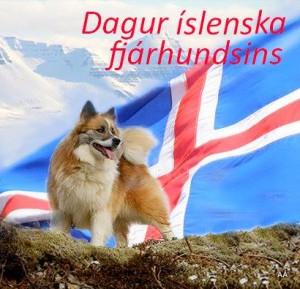 Dagur íslenska fjárhundsins