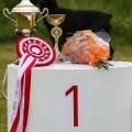 Fleiri myndir frá hundasýningu HRFÍ 23. júlí