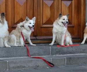 mbl: Hundar komast ekki heim