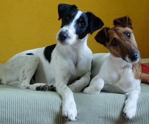 Hver er staðan nú í innflutningi hunda?