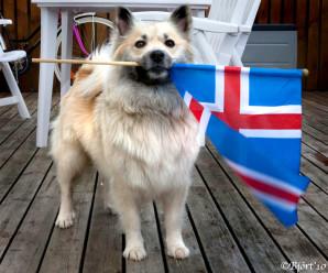 Dagur íslenska fjárhundsins verður 18. júlí
