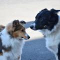 Af hverju halda hundum í gíslingu