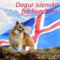 Dagskrá í Þjóðminjasafninu á Degi íslenska fjárhundsins 18. júlí