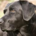 Hugleiðingar um strætó og sprengjuleitarhunda
