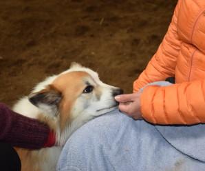 Tugir hunda heimsækja fólk á heimili og stofnanir