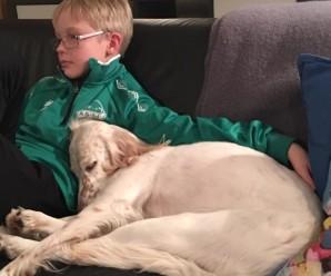 Hjálparhundur – hvernig verður hann til?