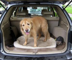 Frétt fra Mast: Hundar í bílum