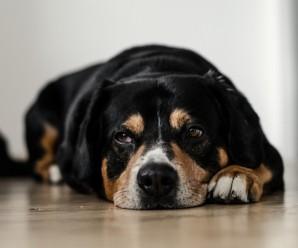 Hundabannskilti og hundaskattur
