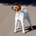 MAST: Hundaæðisdagurinn 2017