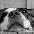 MAST: Vörslusvipting á hundi vegna vanhirðu